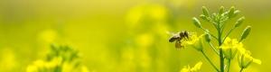 دارایی های زیستی فعالیت های کشاورزی مولد و غیرمولد